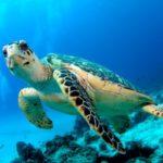 Volonterski program zaštite morskih kornjača u Meksiku
