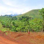Potrebni volonteri TOWOC organizaciji iz Kameruna