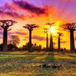 Stažirajte u SEED organizaciji na Madagaskaru